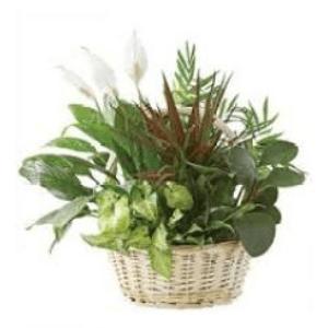 dish garden plant indoor
