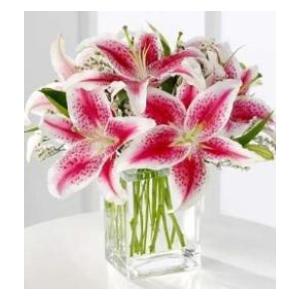 pink stargazer lily arrangement