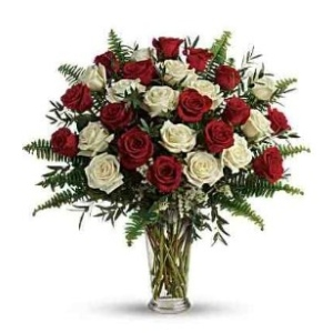red white roses flowers