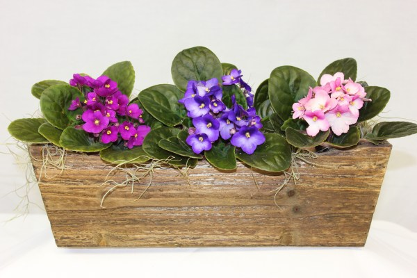 This trio comes with three african violets in assorted colors- they may be shades of pink, purple, or white