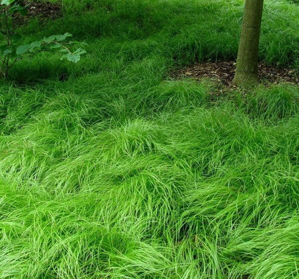 thick long green grass