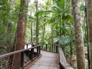 Tropical Forest, Queensland