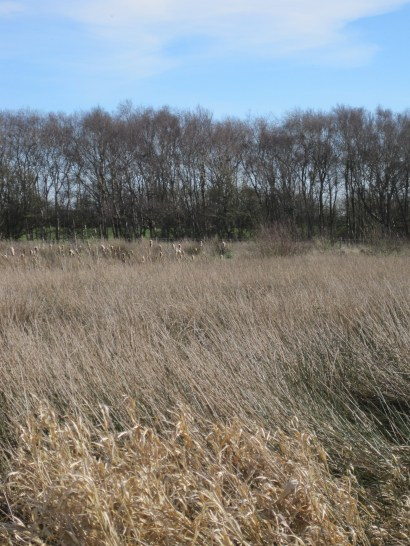 Rushes and sedges and reeds, South side of Rogersceugh track