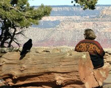 Raven sitting on bench next to woman at Grand Canyon by Sandra Cosentino