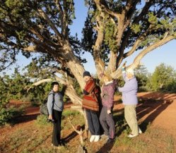 4 ladies, visitors from England, are under a large juniper tree in Sedona. They are connecting with the natural life forces of this tree as part of earth-spirit connection training.