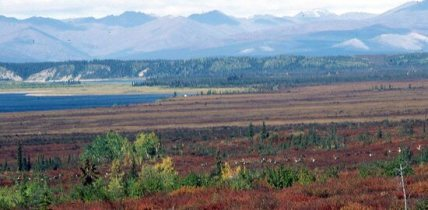 Jade Mountains in the Alaska Range with long line of migrating caribou floating across the red hued fall tundra. This represent a profound mystic experience.