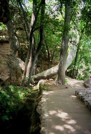 Trail to ancestral sacred spring outlet under the sycamore trees leads to rebirthing ceremony site.