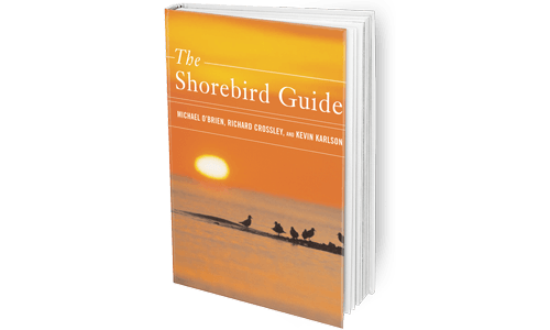 The_Shorebird_Guide_Featured