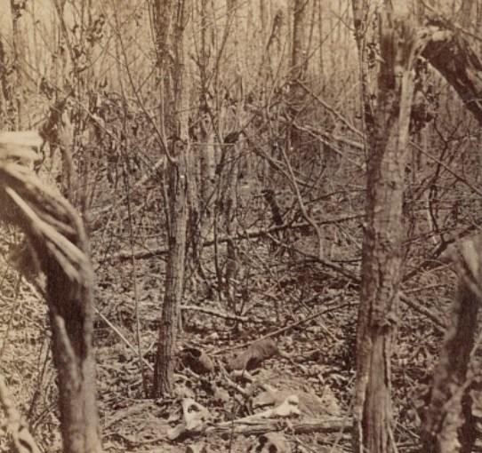 Overgrowth, 1871