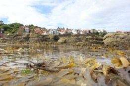 Fendog's Artistic Shot of Robin Hoods Bay