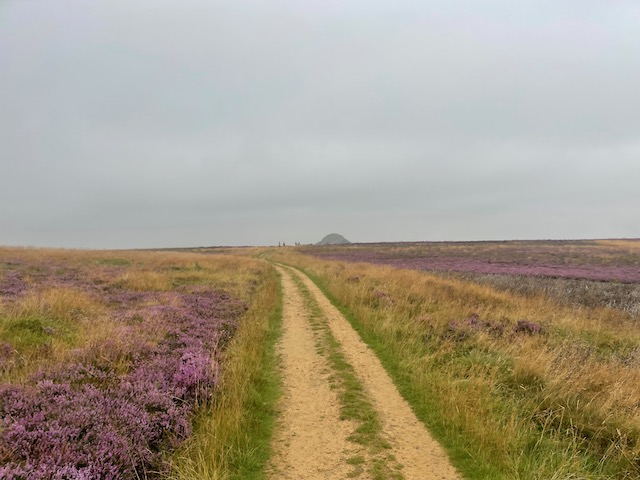 Hardmoors 55- path to Roseberry Topping