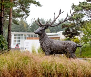Bronze Stag at The Horder Centre stolen