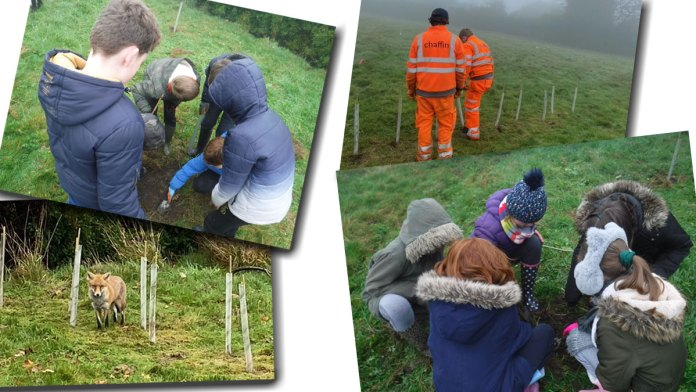 Planting trees for the new wildlife area at Ashdown School in Crowborough