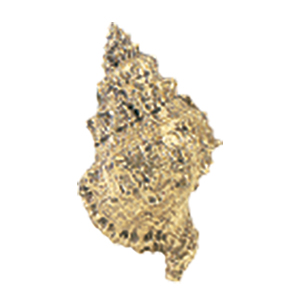 Crowder Designs Decorative Drapery Bracket Collection | Conch Shell