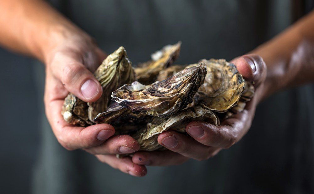Hands with Oysters