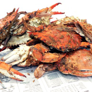 Standard female blue crabs