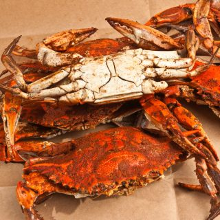 Large male blue crabs