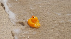 The ducky came on Holiday as well, but he near got swept away, when he decided to take a dip in the ocean...