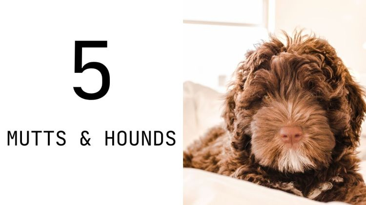 Mutts & Hounds Ylang Ylang & Peppermint Dog Shampoo is cruelty free