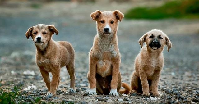 Pet Adoption Malta