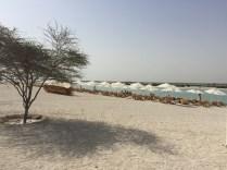 sir bani yas cruise beach