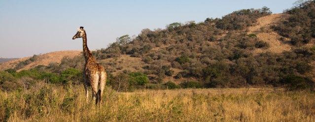 richards-bay-game-safari