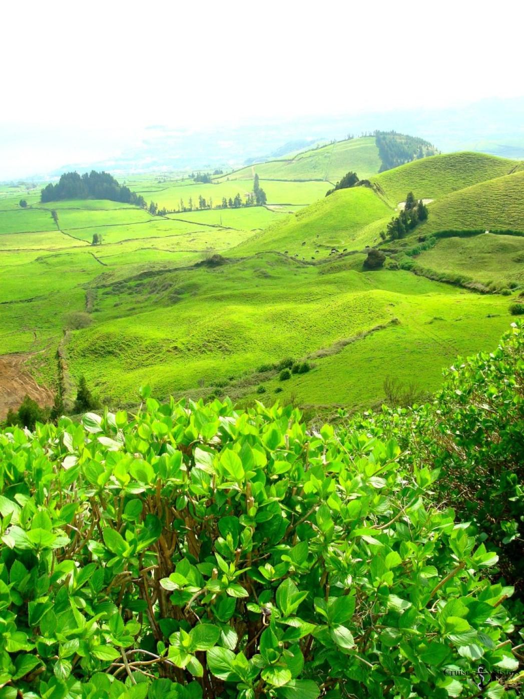 Grüne Felder Sao Miguel