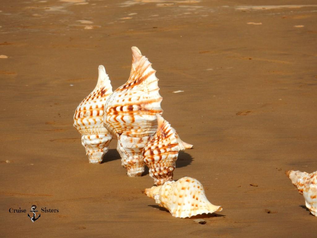 Muscheln im Sand in Agadir in Marokko