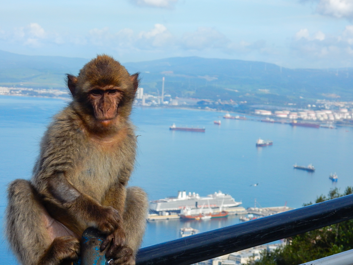 WIld monkeys in Gibraltar and view of the Eurodam