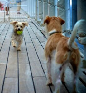 Queen Mary is the only ship in the world to offer dedicated kennels for dogs and cats (photo credit Simone Seckington) (PRNewsFoto/Cunard)