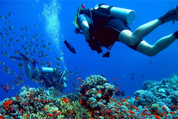 Dive in Montego Bay