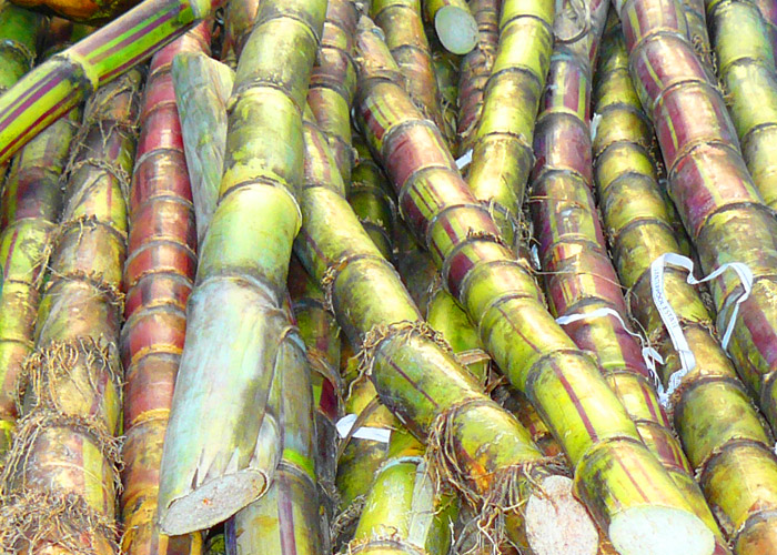 Try a piece of sugar cane