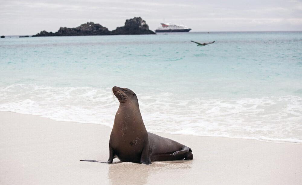 På Galapagos Øerne med Silversea Expeditions byder på strande med vild flora og fauna