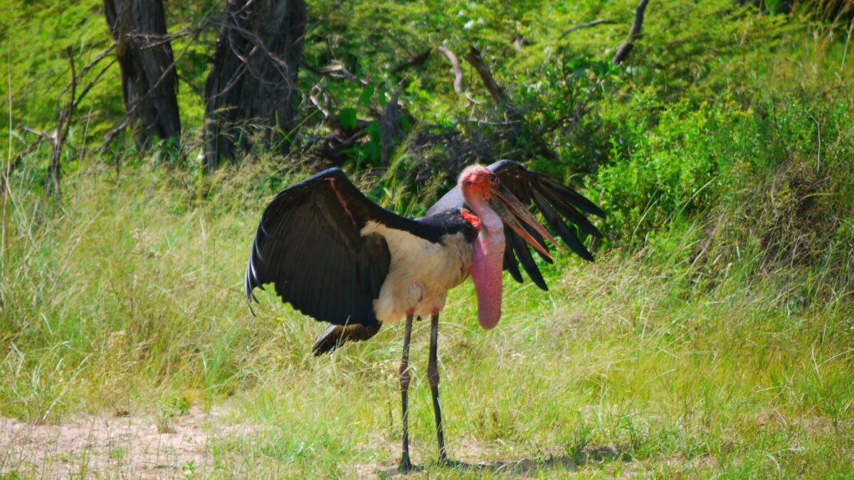 Se dyr i Botswana, du ikke finder andre steder i verden