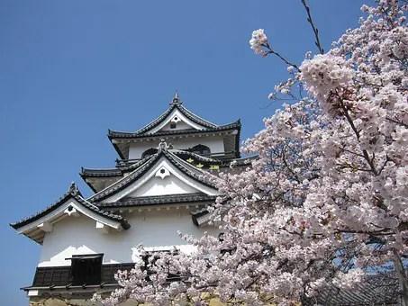 cherry-blossom-1455841__340