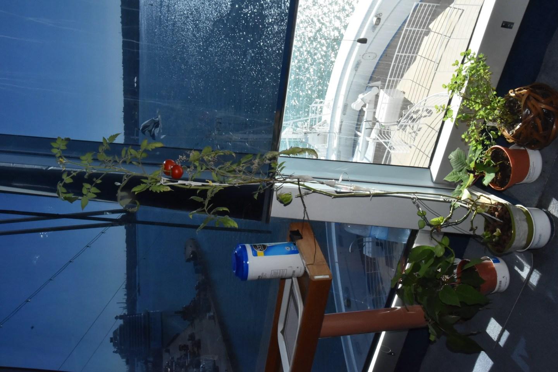 cruise ship bridge garden