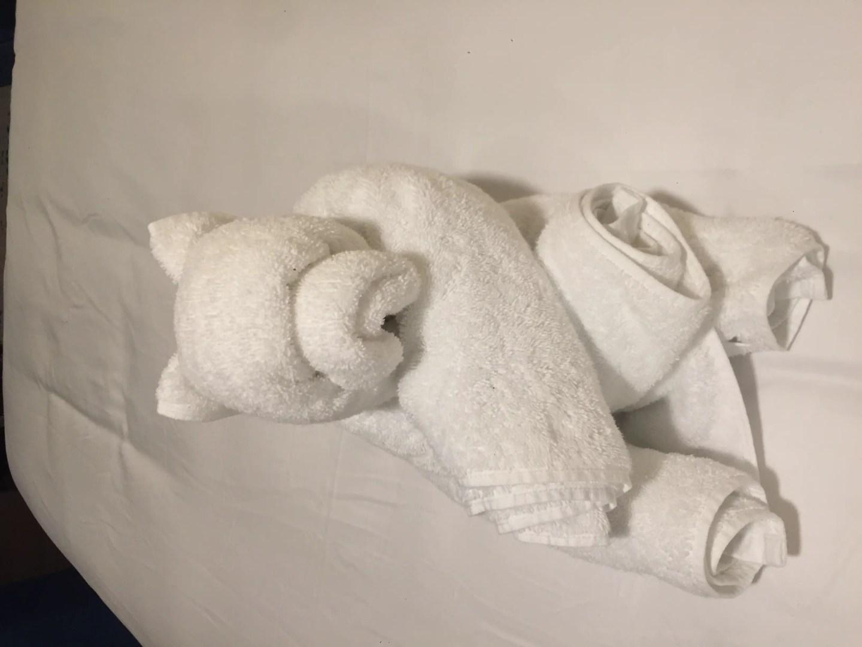 towel bear cruise
