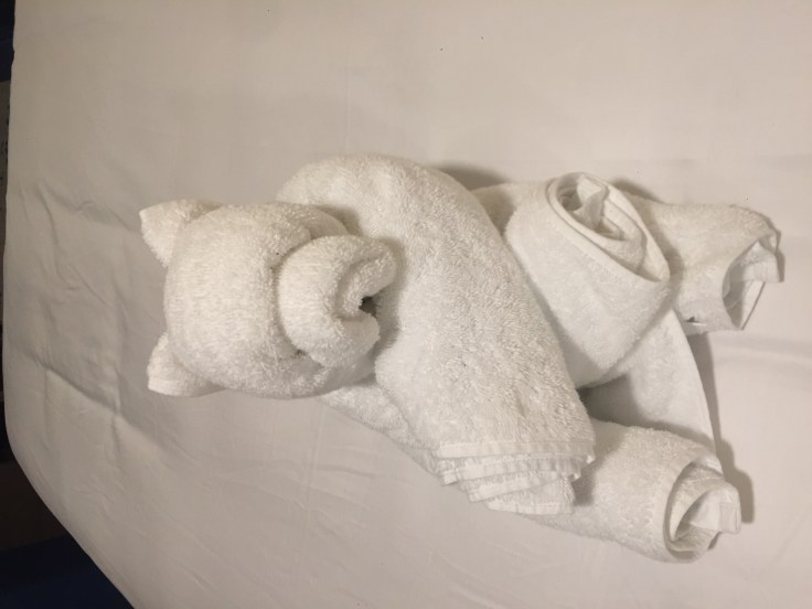 towel bear cruise