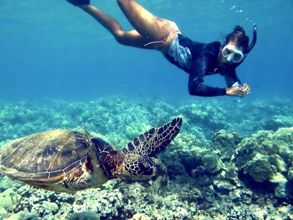 Barbados snorkeling