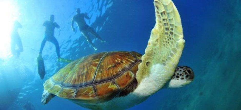 Costa Adeje's El Puertito de Armenime bay is frequented by turtle