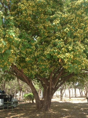Lunchbreak under this beautiful tree outside Clermont.
