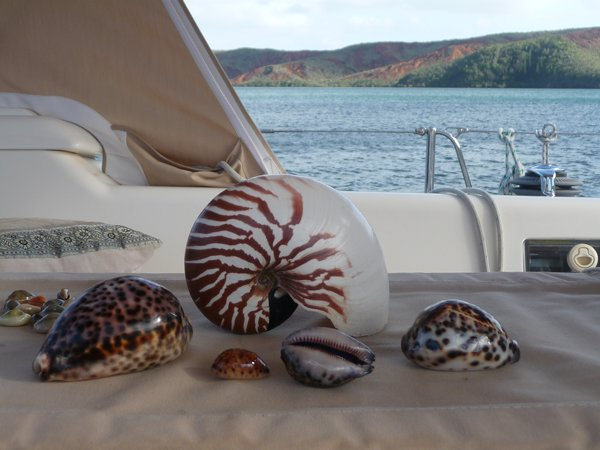 Nautilus and other shells
