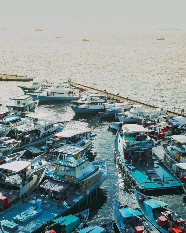 Busy day at Male fishing harbor