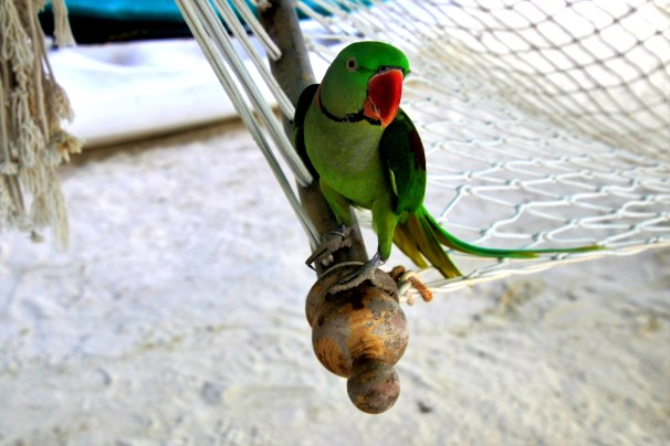 let's find out if the parrot is willing to share the hammock