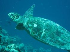 turtle snorkeling excursion