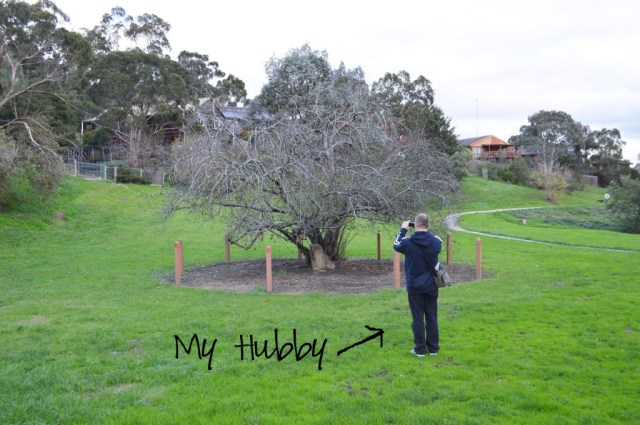 hubbytree copy