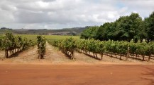 Visit Stellenbosch for wine tours and tastings