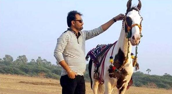 Siraj Pathan Horse Saqab