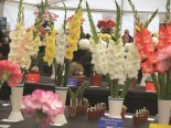 Malvern Autumn Show Jan11