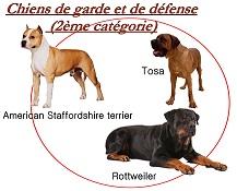 chien catégorie 2